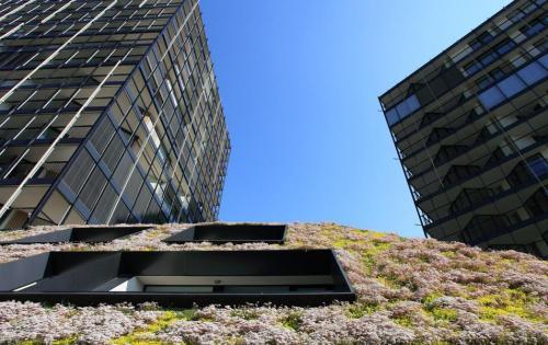 Extensive Dachbegrünung der Wohnanlage Central Park in Prag