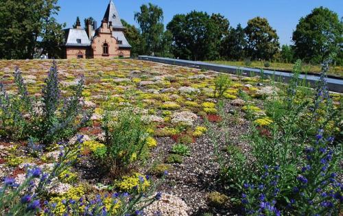 Blühende Pflanzen auf dem Gründach des SAP-Standorts in St. Ingbert (Saarland)